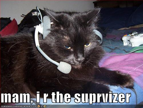 funny-pictures-call-center-cat